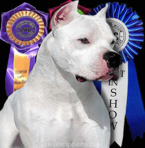 Dogo Argentino Breed Standard
